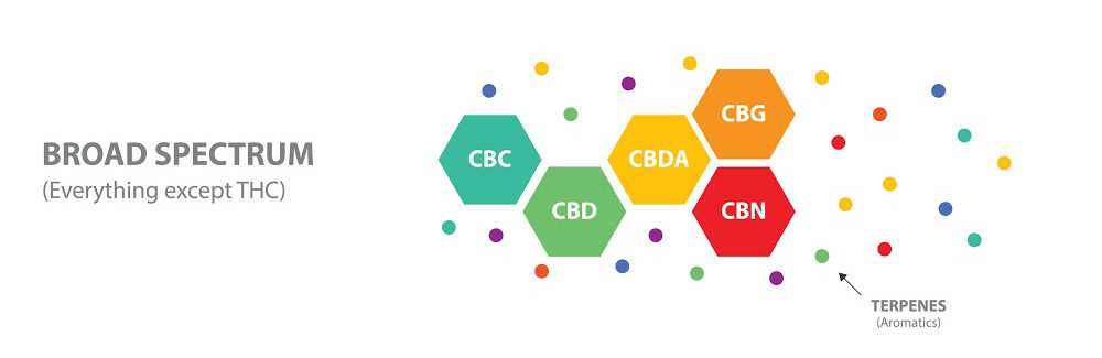 Broad-spectrum CBD products contain CBD and other hemp compounds, but they're free of THC.