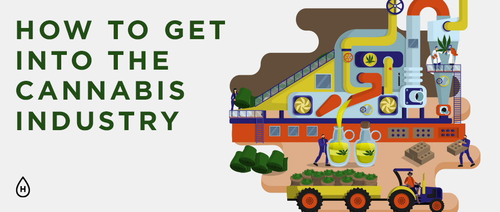 Joining the Cannabis Industry – A Complete Guide